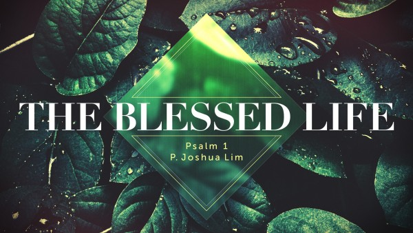 the-blessed-lifeThe Blessed Life