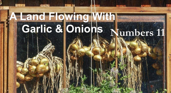 A Land Flowing With Garlic & Onions!!