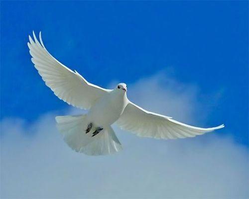 the-compassionate-and-gracious-godThe Compassionate and Gracious God