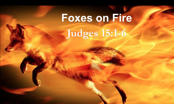 Foxes on Fire