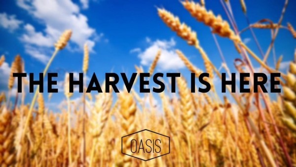 the-harvest-is-hereThe Harvest Is Here