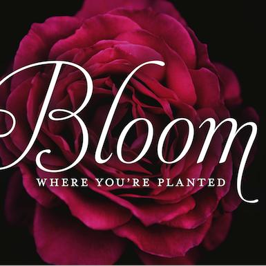 bloomBloom