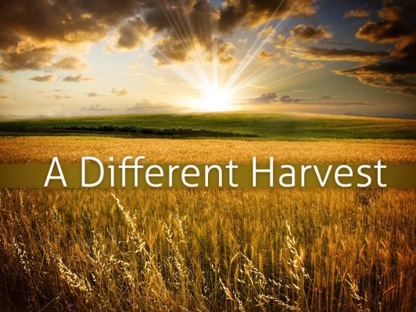 A Different Harvest - Part 1