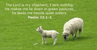 Walking With the Shepherd