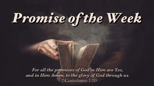 God's Promises Are Established