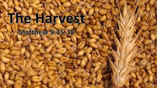 the-harvestThe Harvest