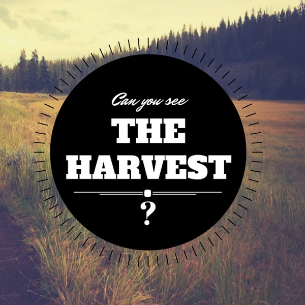 can-you-see-the-harvest-apr-24th-2016Can you see the harvest ? - Apr 24th , 2016