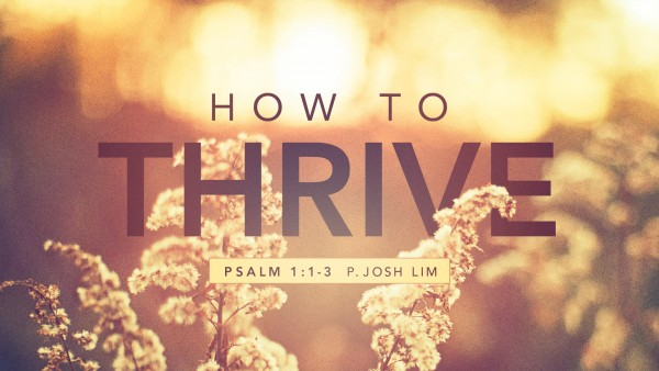 how-to-thriveHow to Thrive