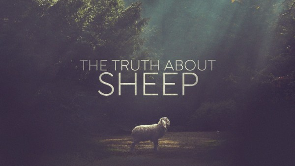The Truth About Sheep