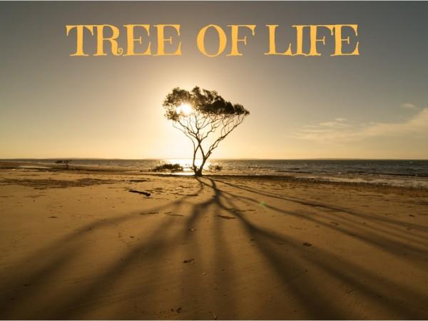 tree-of-lifeTree of Life