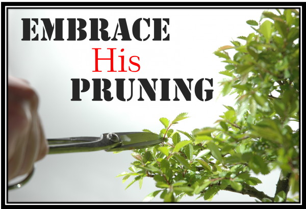 embrace-his-pruningEmbrace His Pruning