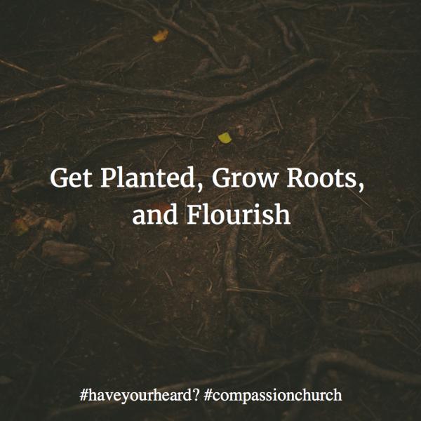 Get Planted, Grow Roots, & Flourish