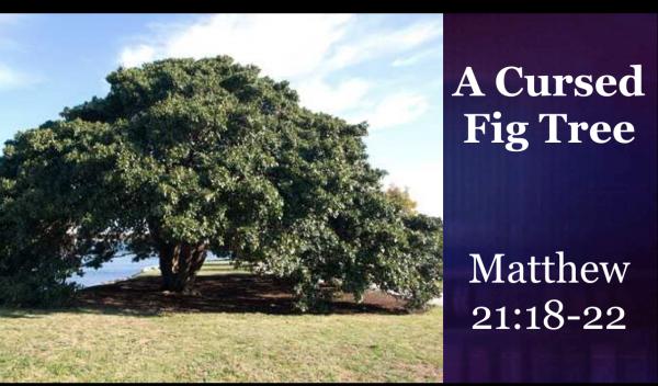A Cursed Fig Tree