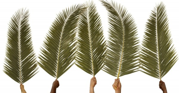 The Coronation of the King? (Palm Sunday 2019)