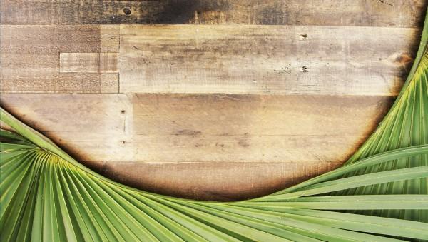 palm-sunday Palm Sunday