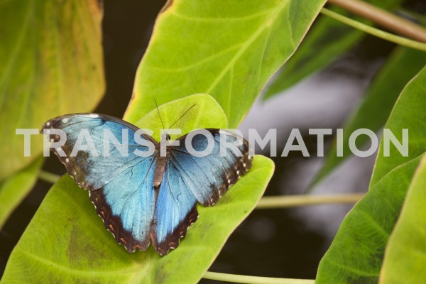 transformationTransformation