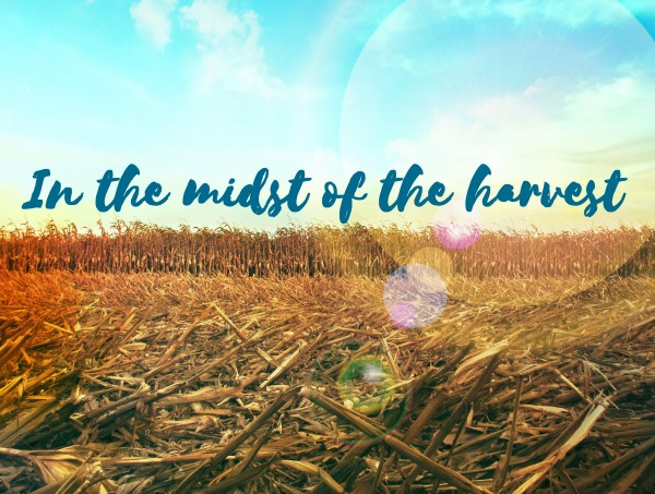 In the midst of the harvest - Sep 18th, 2016