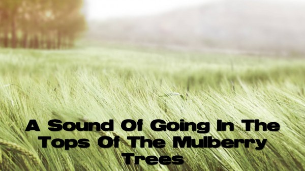 a-sound-of-going-in-the-tops-of-the-mulberry-treesA Sound Of Going In The Tops Of The Mulberry Trees