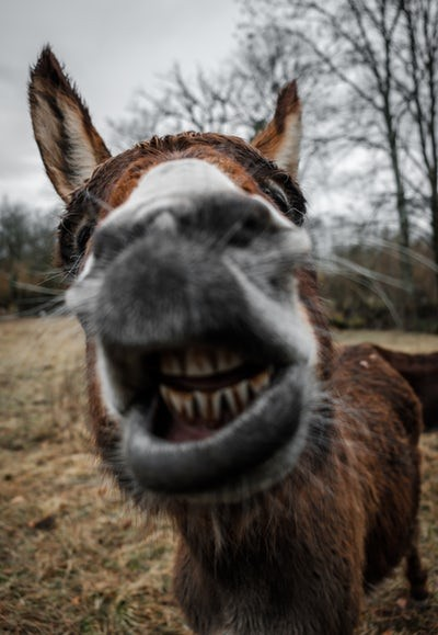 donkey-talesDonkey Tales