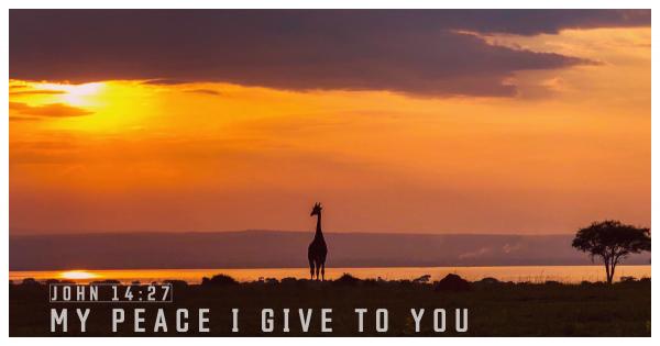 my-peace-i-give-to-youMy peace I give to you